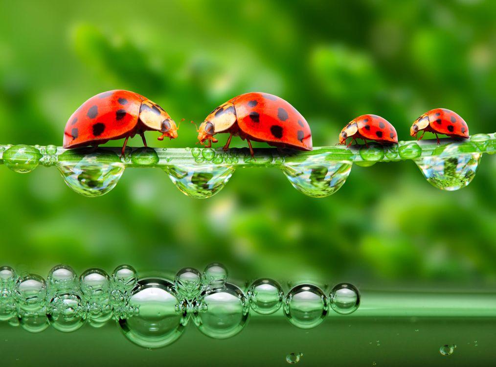 Фото бесплатно роса, жук, зелень - на рабочий стол