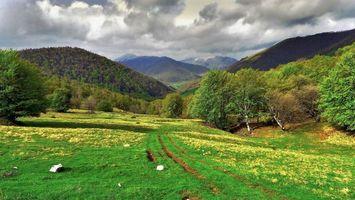 Бесплатные фото поле,горы,деревья,дорога,пейзаж