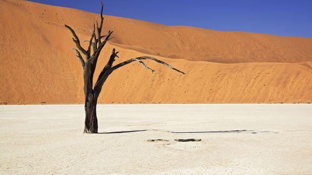 Photo free desert, tree dry, snag