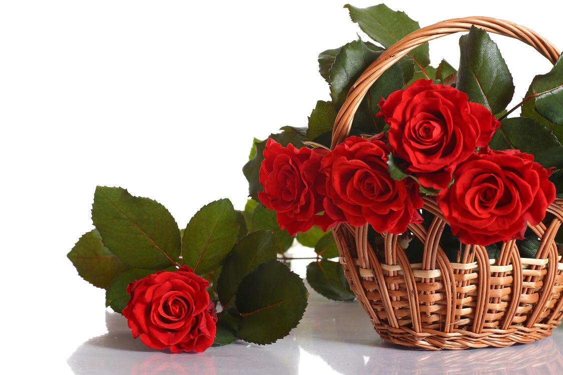 Фото бесплатно розы, роза, цветок - на рабочий стол