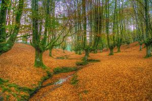 Бесплатные фото Otzarreta,Bizkaia,Spain,лес,осень,речка,деревья