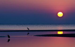 Бесплатные фото вечер,побережье,птицы,море,горизонт,небо,солнце
