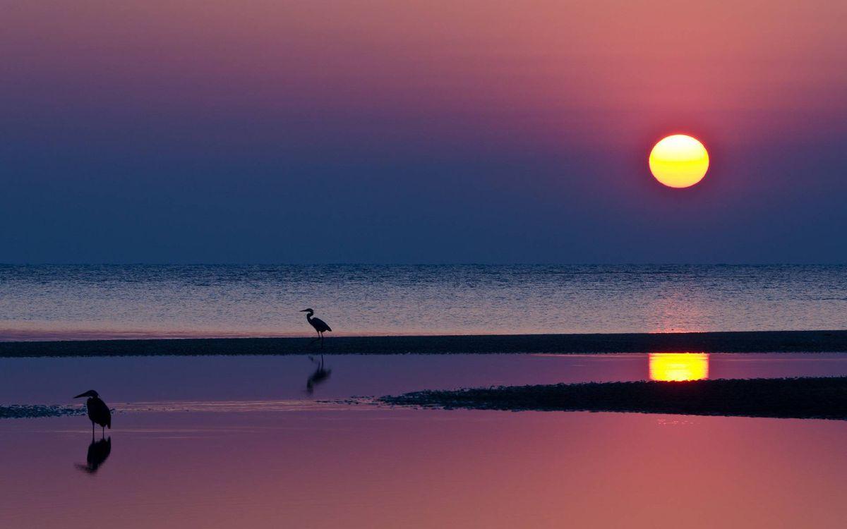 Фото бесплатно вечер, побережье, птицы - на рабочий стол