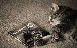 Фото бесплатно кот, альбом, его фото, секреты, кошачьей, жизни, кошки, ситуации