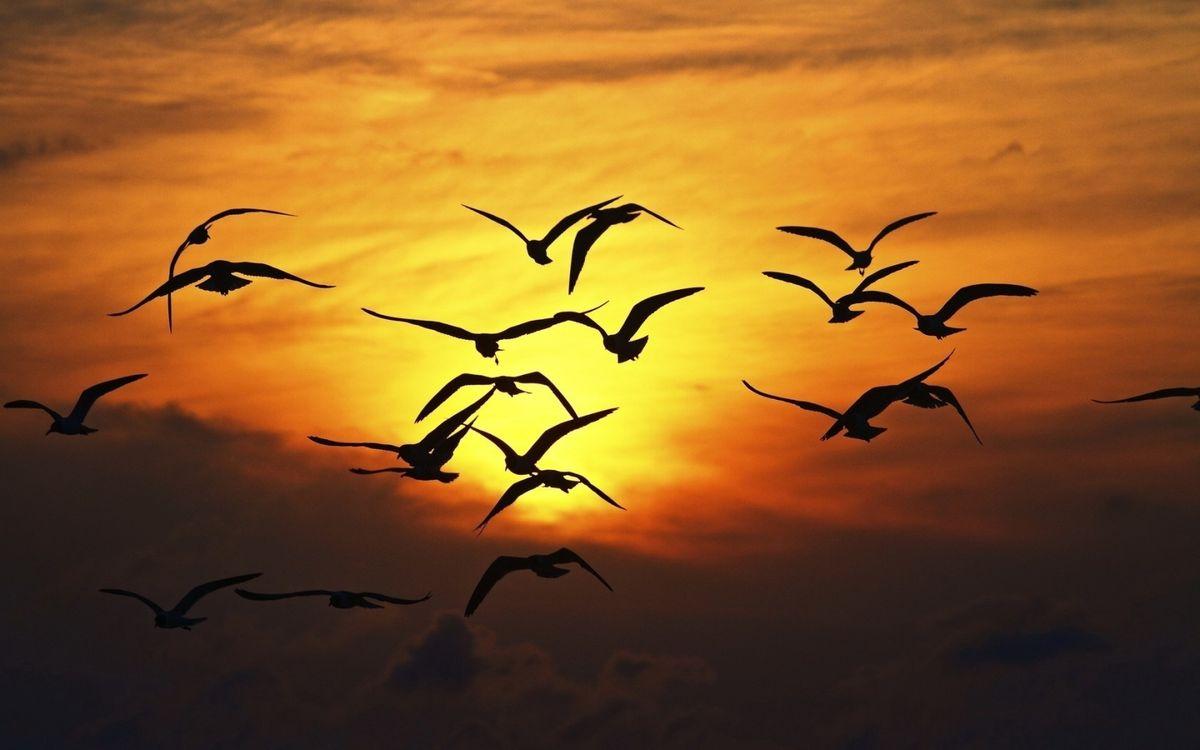 Фото бесплатно чайки, фон, закат, солнца, вечер, оранжевое, небо, стая, птицы, птицы