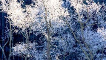Бесплатные фото деревья, иней, зима, холод, мороз, снег, природа