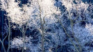 Фото бесплатно деревья, иней, мороз