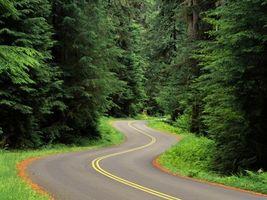 Фото бесплатно деревья, елки, дорога, лес, линии, разметка, кора, стволы, обочина, трава, природа, пейзажи