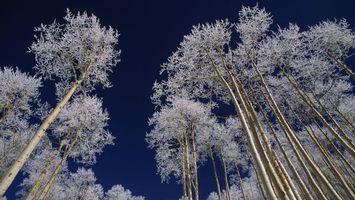 Бесплатные фото деревья,небо,зима,иней,береза,ночь,снег