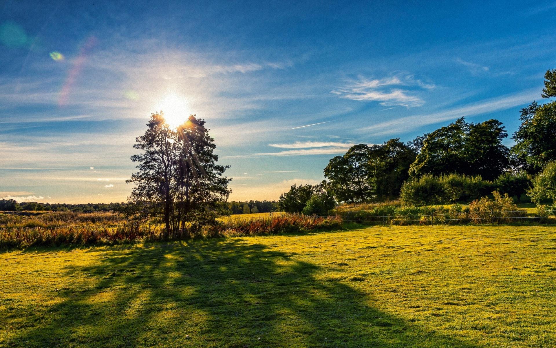 Обои деревья, трава, поле, луг