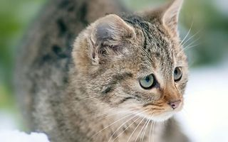 Фото бесплатно кошка, морда, усы