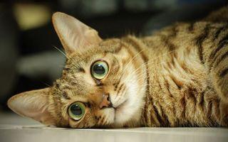 Заставки кот, глаза, зеленый