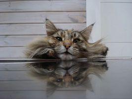 Фото бесплатно кот, моська, щеки