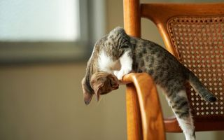 Обои кот, стул, поза, ситуации, юмор, кошки