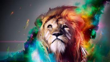 Обои лев, грива, шерсть, цвета, краски, глаза, взгляд, животные