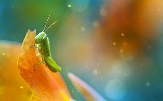 Фото бесплатно насекомое, вредитель, зеленый