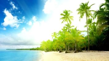 Заставки остров, пальмы, деревья