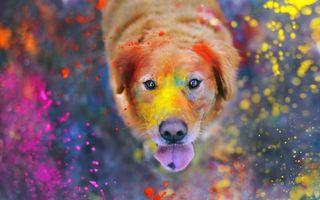 Бесплатные фото пес,щенок,краска,вымазался,играл,капли,брызги