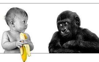 Фото бесплатно ребенок, малыш, банан