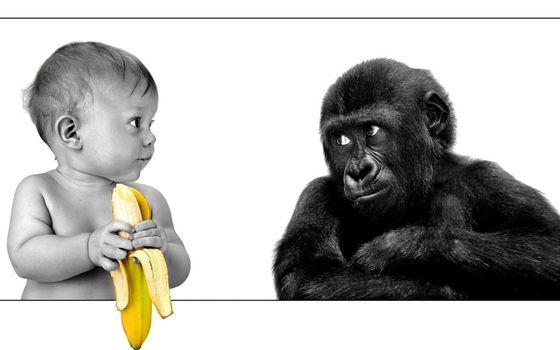 Бесплатные фото ребенок,малыш,банан,горилла,детеныш,взгляд,юмор