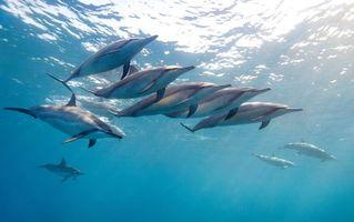 Фото бесплатно стая, дельфины, плавники
