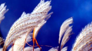 Бесплатные фото трава,пух,ветки,небо,голубое,белый,поле