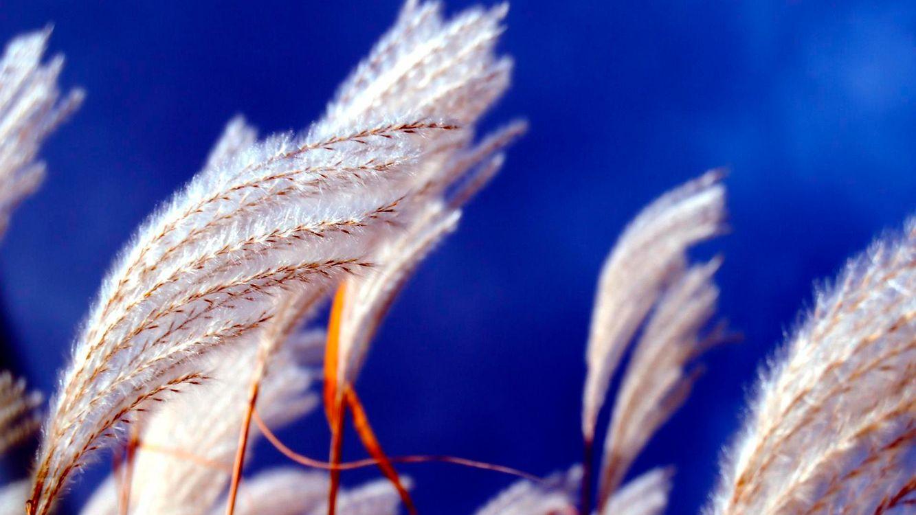 Фото бесплатно трава, пух, ветки, небо, голубое, белый, поле, луг, лето, жара, природа, цветы, цветы