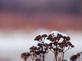 Фото бесплатно трава, растение, снег