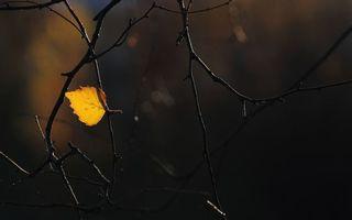 Фото бесплатно лист, осень, макро