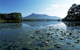 Бесплатные фото вода, озеро, лилии, природа, деревья, лес, берег