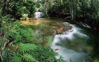 Заставки вода,река,лес,водопад,цветы,деревья,берег