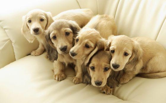 Бесплатные фото друзья,собаки,щенки