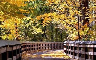 Бесплатные фото аллея, тропинка, перила, листва, деревья, осень, пейзажи