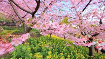 Фото бесплатно дерево, цветет, розовое