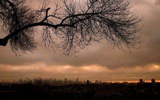 Фото бесплатно дерево, парк, ветки