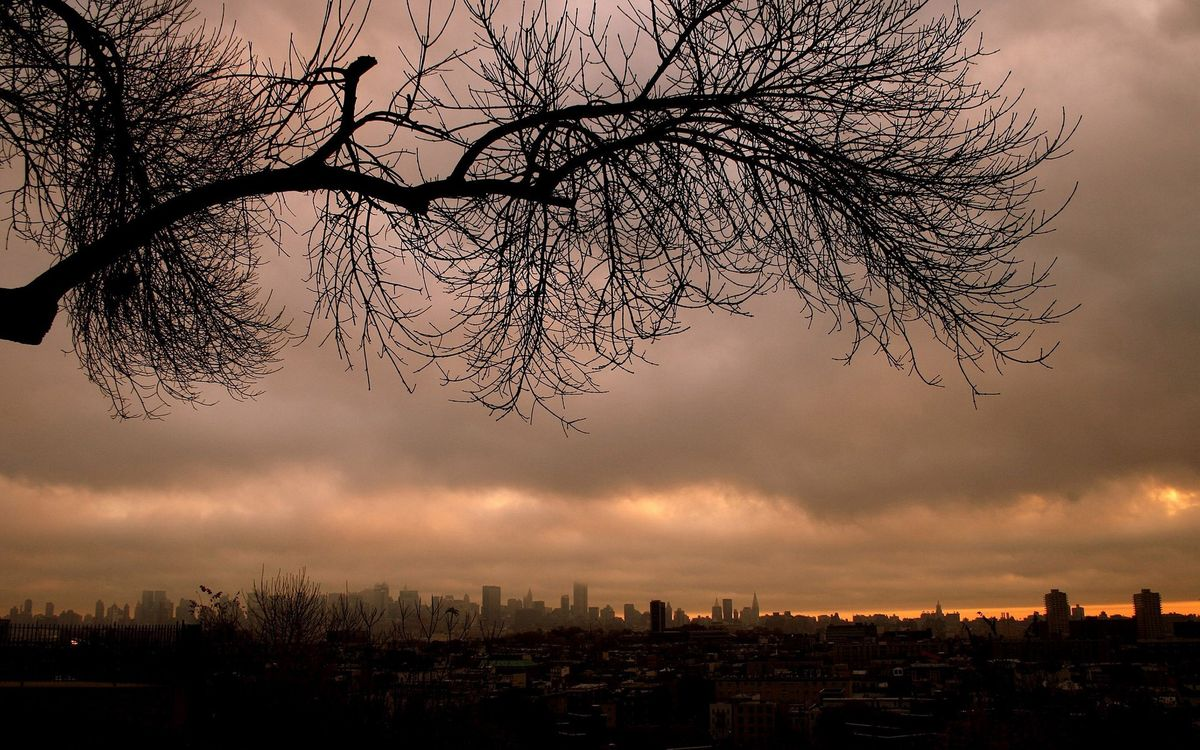 Фото бесплатно дерево, парк, ветки - на рабочий стол