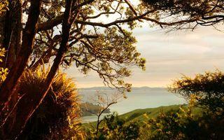 Фото бесплатно пейзажи, трава, деревья