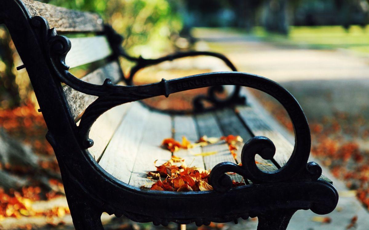 Обои лавочка, скамейка, деревянная, ручки, листья, листопад, осень, парк, природа на телефон   картинки природа - скачать