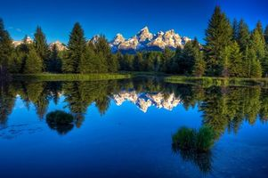 Бесплатные фото лес, деревья, кусты, трава, озеро, вода, горы