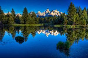 Бесплатные фото лес,деревья,кусты,трава,озеро,вода,горы