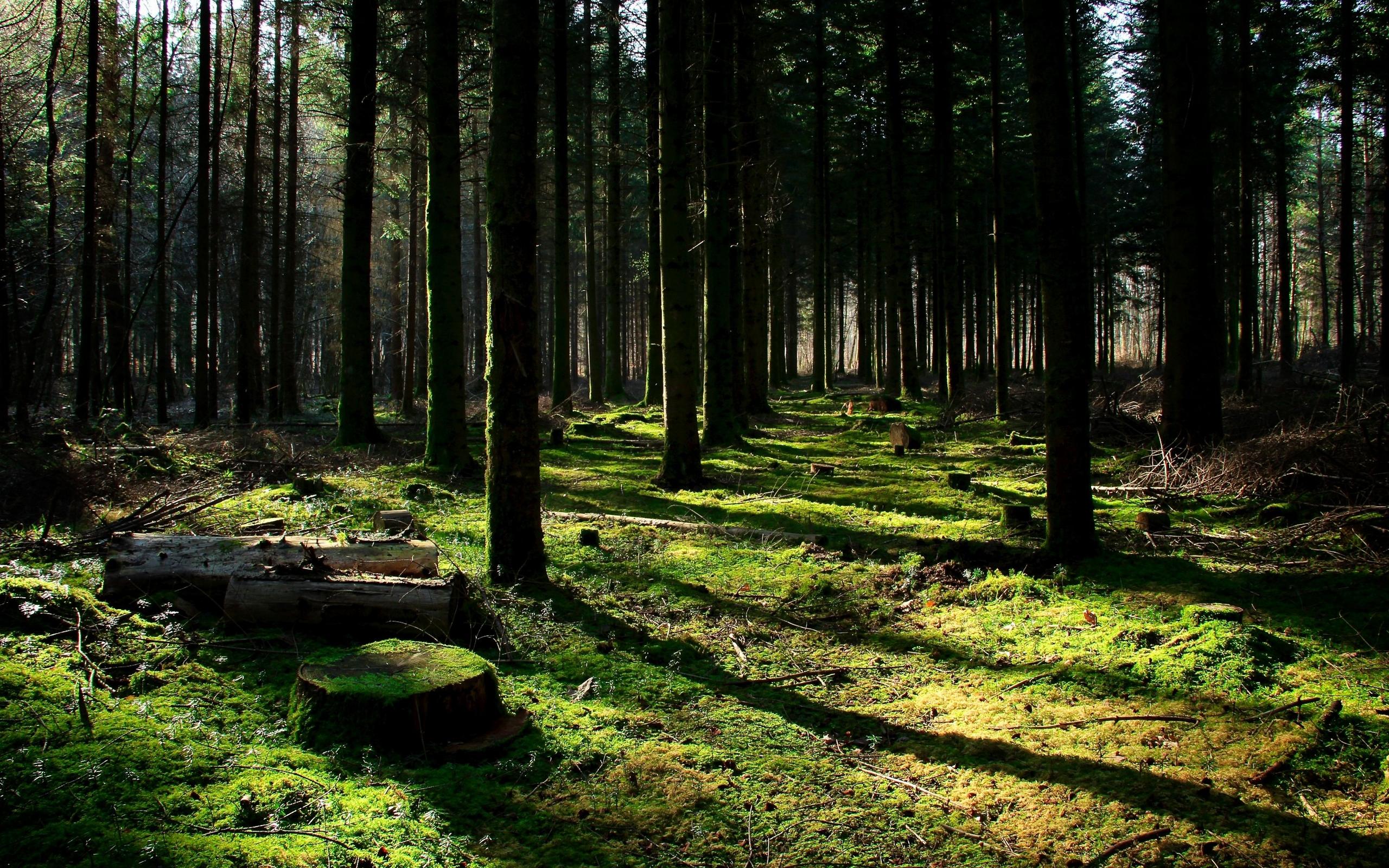 лес, деревья, пеньки