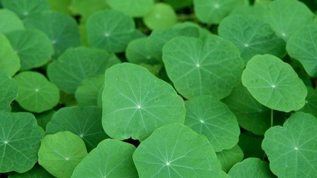 Photo free leaves, many, green