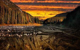 Photo free sky, sunset, trunks