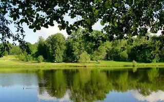 Бесплатные фото озеро, пруд, утка, отражение, трава, деревья, природа
