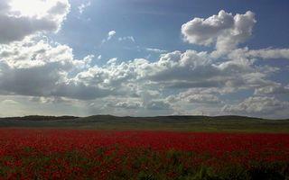 Фото бесплатно красный, небо, солнце