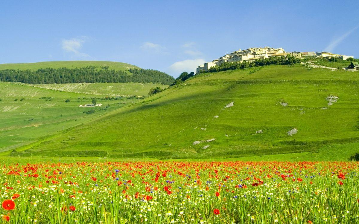 Фото бесплатно поле, цветы, маки - на рабочий стол