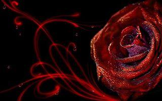 Бесплатные фото роза,красная,лепестки,капли,вода,линии,разное