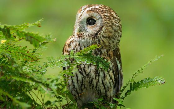 Бесплатные фото сова,перья,клюв,папоротник,листья,цветы,лес,взгляд,животные,природа,птицы
