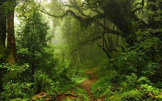Бесплатные фото тропа в лесу,корявое дерево,папоротник,лес,природа