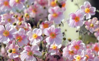 Заставки цветки, лепестки, бутоны